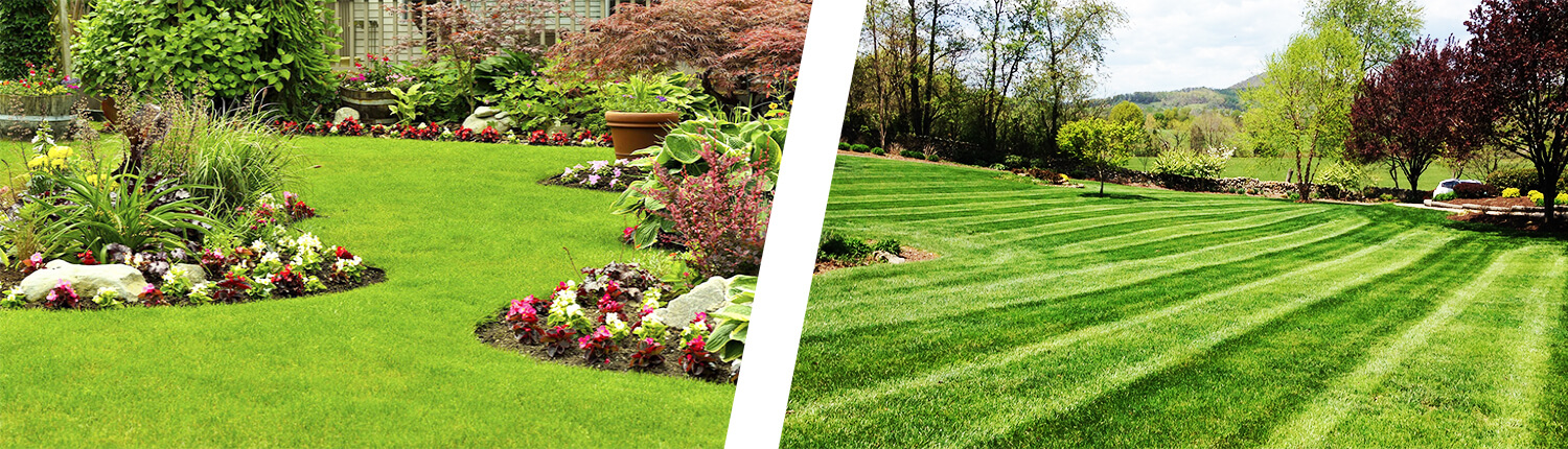 Lawn Care in Forney, TX